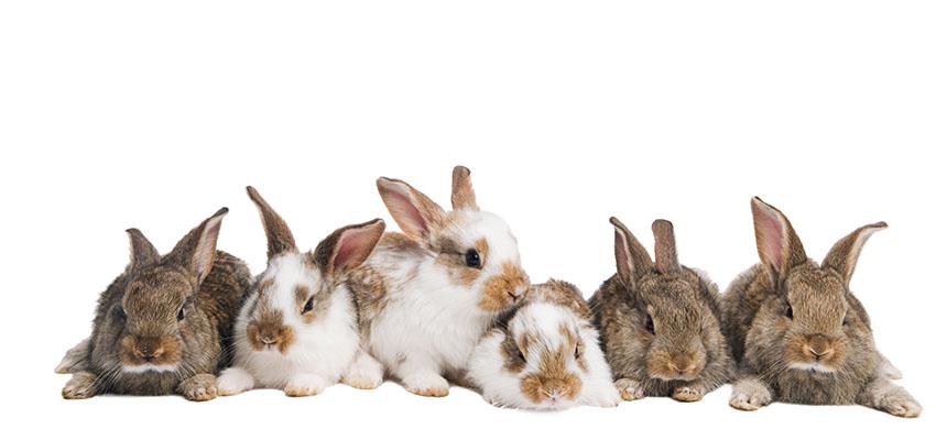 Sei graziosi conigli sdraiati uno accanto all'altro