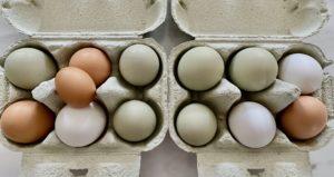 le uova pendono quando sono erette)