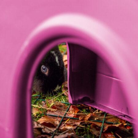 Un coniglio con gli occhi azzurri che guarda attraverso un rifugio Zippi rosa