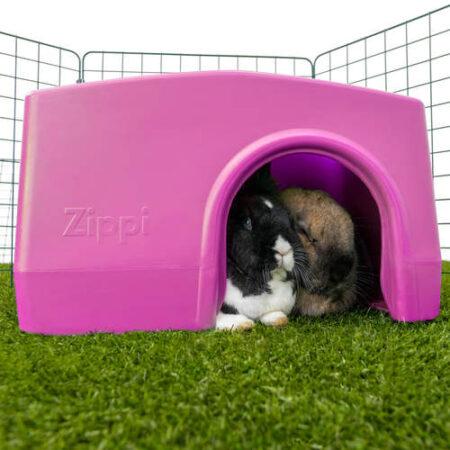 Due conigli si nascondono in un rifugio viola in un recinto