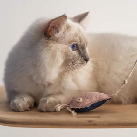 Un gatto che gioca con una medusa giocattolo