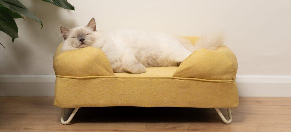 Un ragdoll che dorme su una cuccia bolster gialla